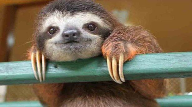640px-cute_sloth